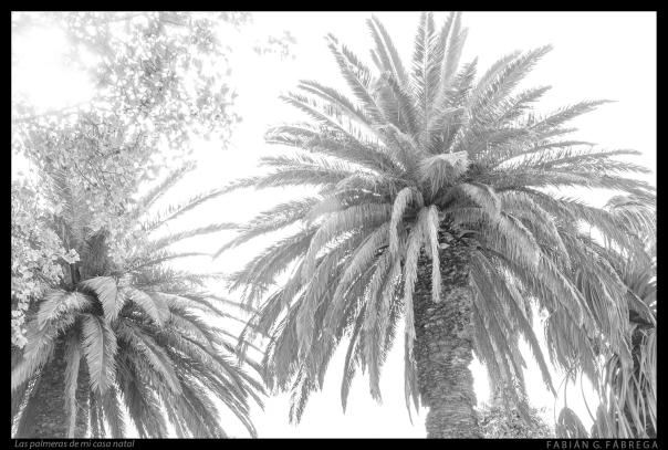 Las palmeras de mi casa natal