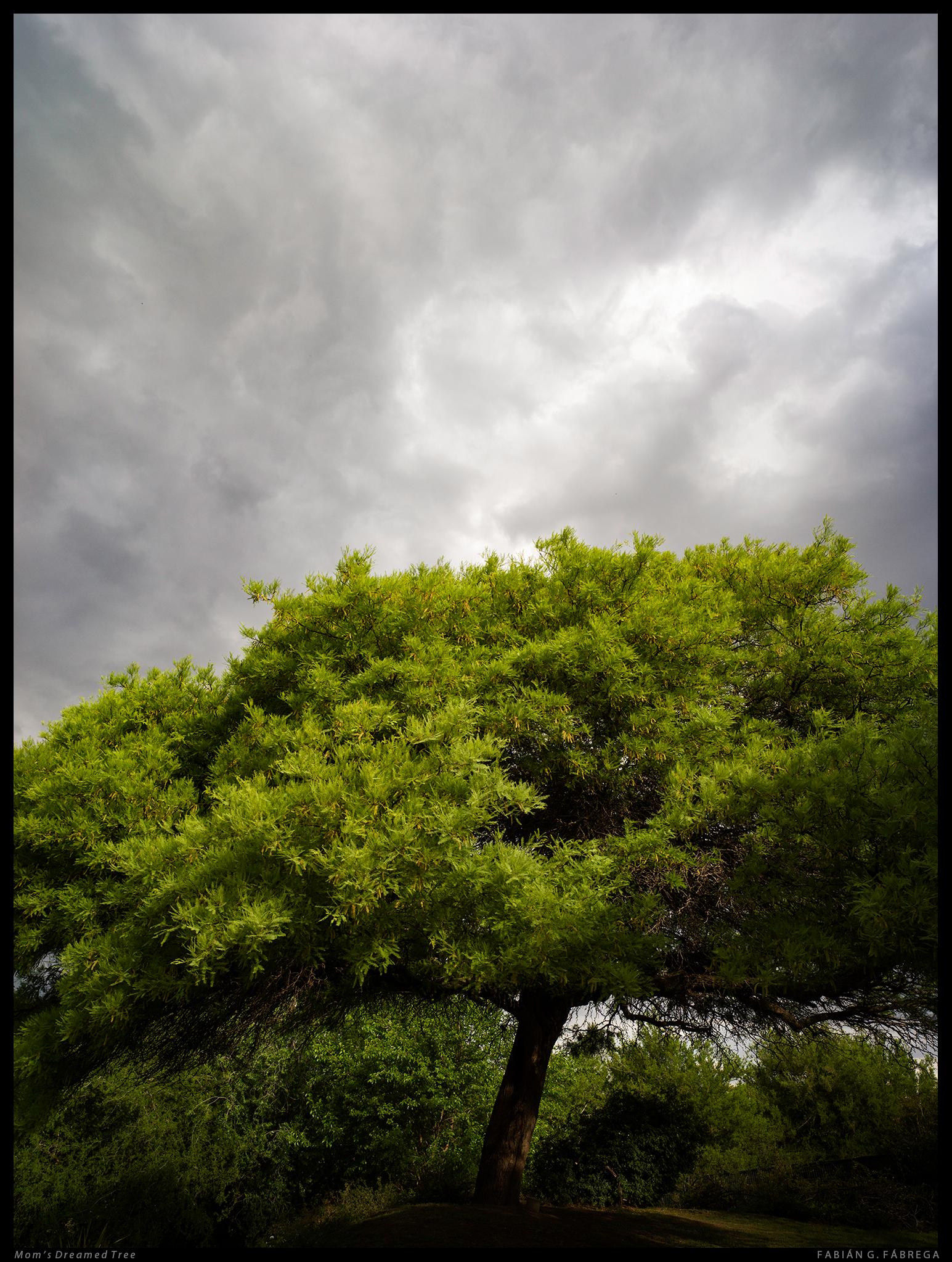 Mom's Dreamed Tree